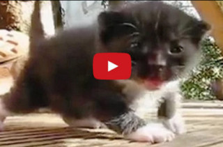 A Painfully Cute Video Of Baby Kittens Walking