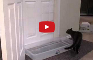 This Cat Opens Doors Like A Pro, Now I'm Scared