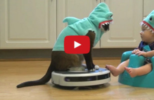 Cat+Baby+Roomba+Shark Costumes = Purrfection