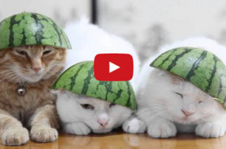 Cats Wearing Watermelons Is All You'll Ever Need