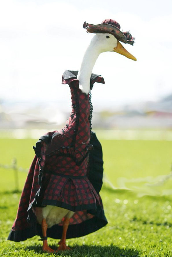amazing photos from the 2014 duck fashion show