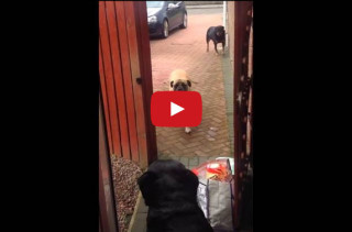 Dog Brings In Groceries, Makes Other Dogs Look Bad