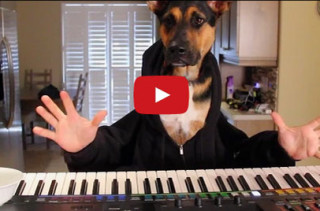 Watch This Dog Play Piano & Try Not To Crack A Smile