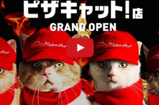 Cats Run A Pizza Hut In Japan, Absurdity Ensues