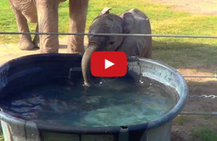 A Baby Elephant Blowing Bubbles Will Make You Smile