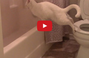 Cat Tries To Use The Toilet & Fails Miserably