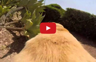 This Dog Loves Water More Than You Love Anything