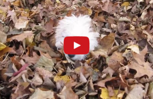Watch This Puppies Jumping In Leaves Compilation