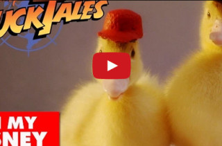 DuckTales Theme Song With Actual Ducks. YESSS!