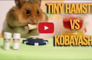 Hamster Battles Kobayashi In Hot Dog Eating Contest