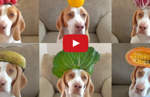 Dog Wears 100 Fruits & Veggies On His Head