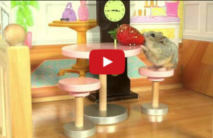 A Tiny Hamster In A Tiny House Is Too Cute For Life
