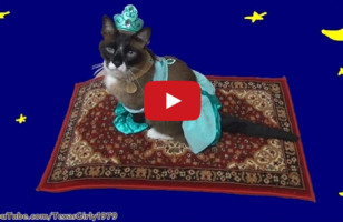 A Cat Dressed As Princess Jasmine, Riding A Magic Carpet