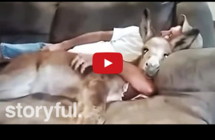 A Donkey Sweetly Snuggling A Human Is Enough Internet For Me, Thanks