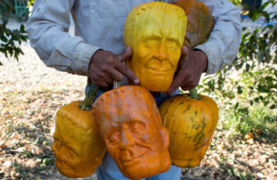 This Farmer Has Created A Monster!: Frankenstein Pumpkins