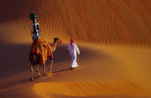 Google Hires A Camel To Do Street View For A Desert
