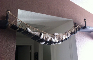 Indiana Jones Cat Bridge: It Belongs In A Mewseum
