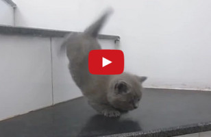 Kittens Learning To Take The Stairs Is TOO CUTE