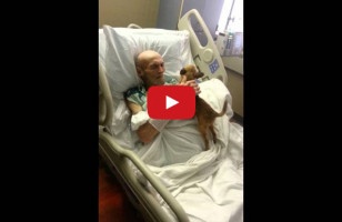 A Sick Man & His Dog Are Reunited = All The Tears