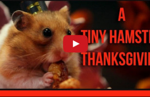 Tiny Hamster Hosts Tiny Thanksgiving For Tiny Guests
