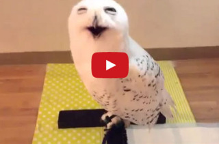 Can't Stop Smiling At This Smiling Owl