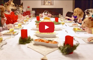 Some Dogs And A Cat With Human Arms Eat Christmas Feast