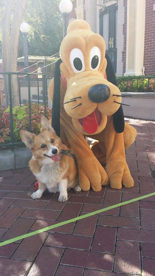 Pluto And Dog Best Day Ever