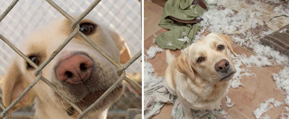 pet-adoption-before-and-after-13