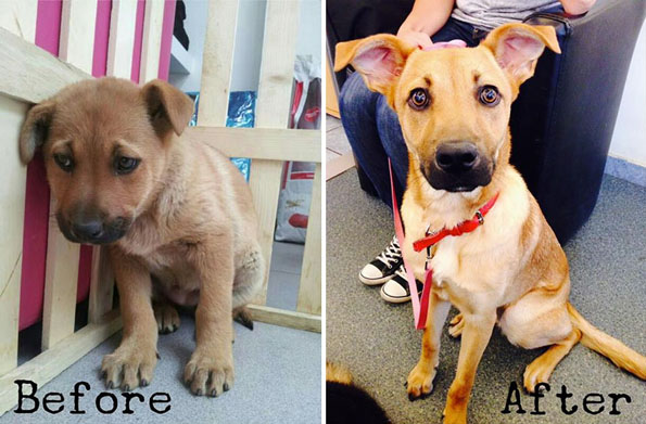 pet-adoption-before-and-after-4