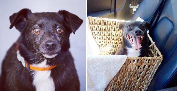 pet-adoption-before-and-after-5