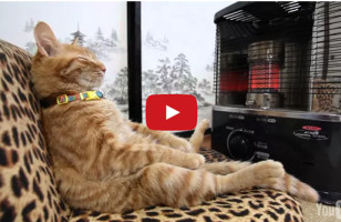 A Cat Relaxes On A Sofa In Front Of A Heater Like A Person