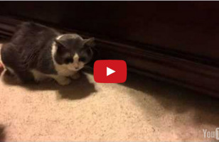 Watch This Cat Hilariously Steal Treats From Under The Bed