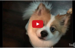 A Little Puppy Is Confronted With A Tough Decision