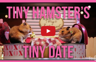 Tiny Hamsters Go On A Tiny Date For Valentine's Day