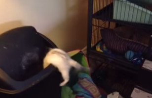 A Ferret Jumps Directly Into A Trashcan, LOLs Ensue