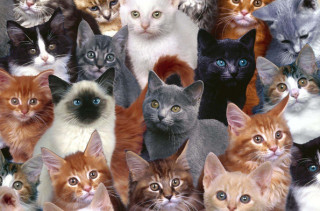 The World's First Ever Cat Convention Is Finally Happening
