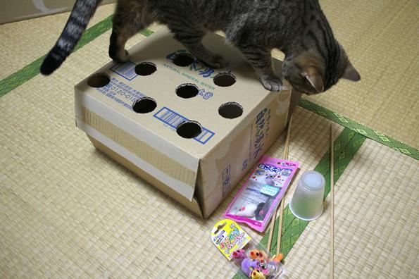 cat-whack-a-mole-1