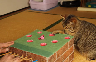 I Could Watch This Cat Playing Whack-A-Mole ALL DAY
