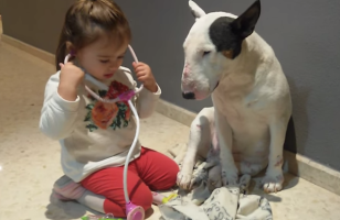 Watch This Adorable Little Girl Give Her Dog A Checkup