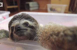 The Cutest Baby Sloth Finds A Camera & Takes Some Selfies
