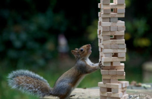 Bizarre But Funny Photos Of Squirrels Doing People Stuff