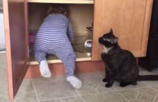 When The Baby Crawls Into The Cabinet, The Cat Locks Her In