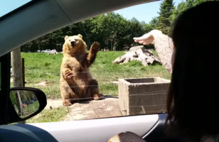 Chillest Bear Catches A Slice Of Bread Like An All-Star