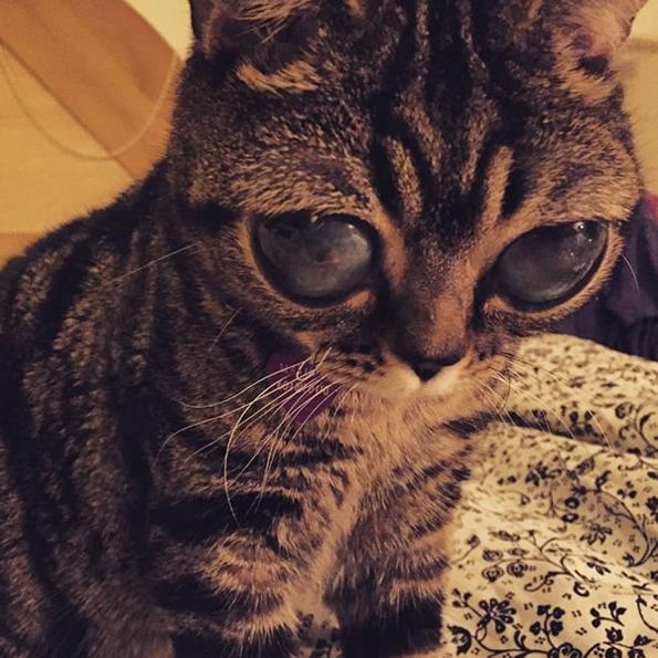 Cat Grwoing Eyes