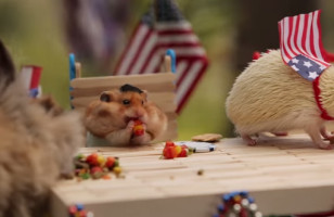 The Tiny Hamster Hosts A Tiny 4th of July BBQ & It Is Adorable