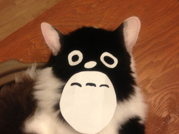 People Are Turning Their Cats Into Totoro