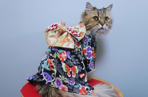 cats-wearing-kimonos-1