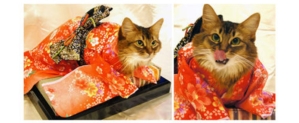 cats-wearing-kimonos-10