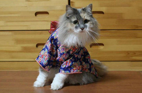 cats-wearing-kimonos-2