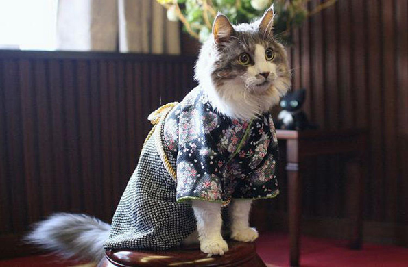 cats-wearing-kimonos-3